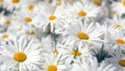 Flowers and Gardens HQ wallpapers Collection 1 E3de59108223744